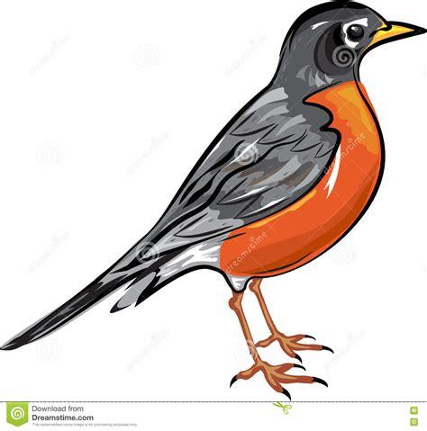 Types Of Backyard Birds American Robin Bird Vector Illustration Stock Vector