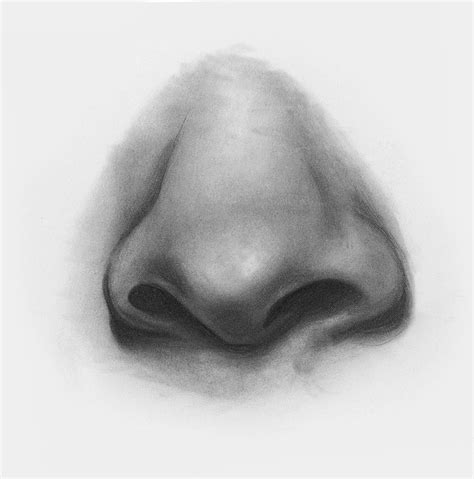 Sketches Nose by Draw Features With This In Depth Beginner S Guide