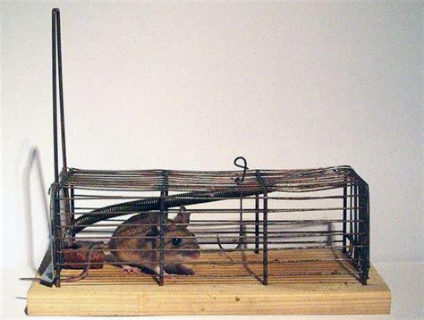 membuat perangkap tikus alami cara tikus newhairstylesformen2014 com