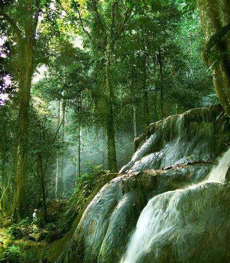 gambar untuk diwarnai pemandangan hutan gambar mewarnai foto anak sma