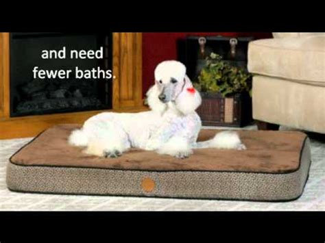 how often should i bathe my puppy how often should you bathe your wash your bedding and crates