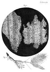Célula – Wikipédia, a enciclopédia livre