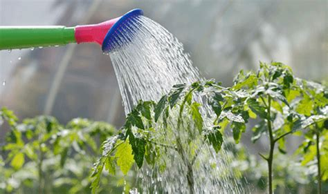 Go Get A Tip Find And Share Tips How Often To Water Vegetable Garden