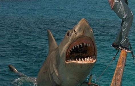 jaws boat length quot that was a franchise quot jaws bloody disgusting