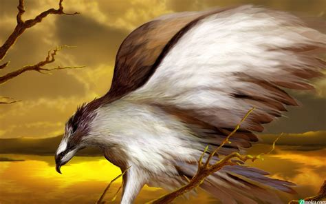 cool eagle wallpaper cool eagle wallpaper download