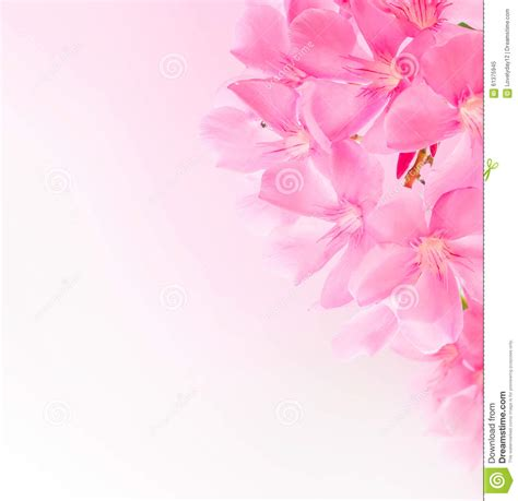 Soft Bordir Flower 2 border or background with pink blossom stock image