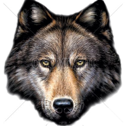 png wolf head transparent wolf head png images pluspng