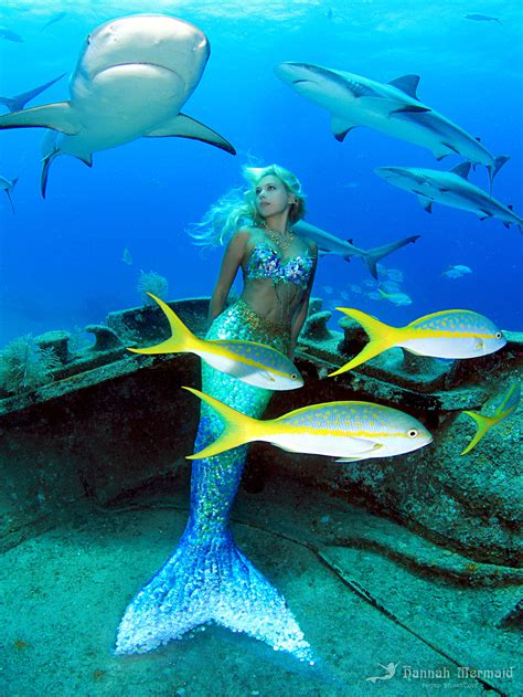 the mermaid shipwreck with sharks mermaid