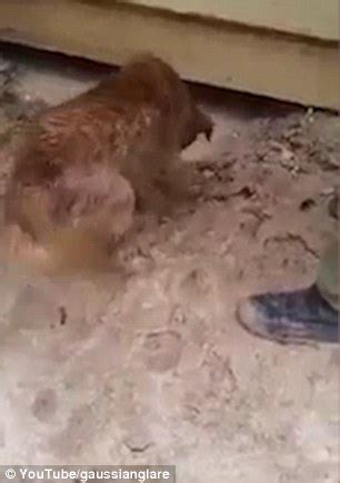 out of the house dog rescue dog risks its own life to dive under house and rescue a
