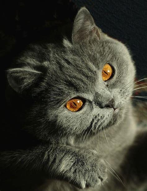 en sevimli hayvanlar