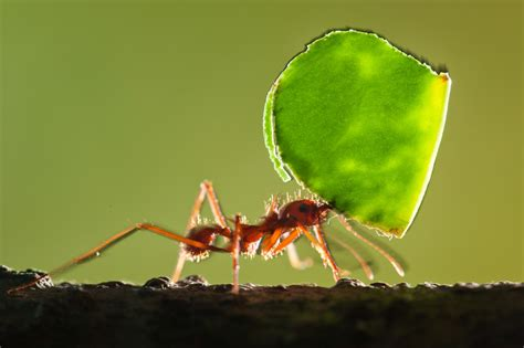 Cutter Ats how do ants get their magnetic compasses national geographic