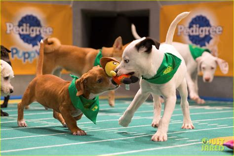 what is the puppy bowl puppy bowl 2017 meet the dogs the more photo 3853450 2017