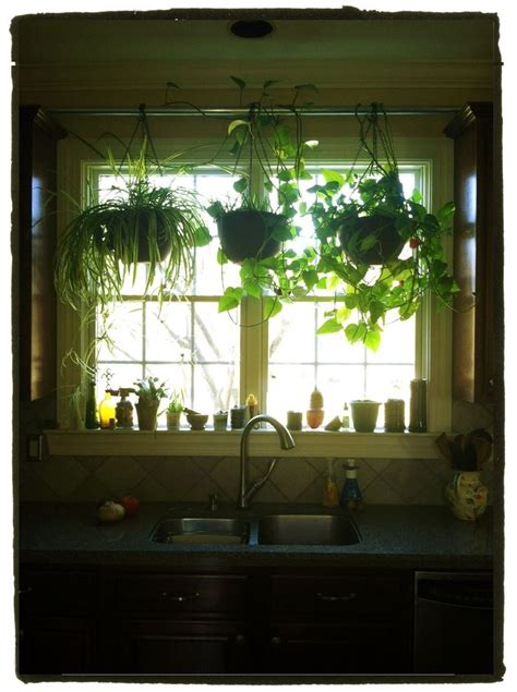 plants in kitchen hang plants in your kitchen window without putting any