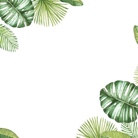 tropical pattern png leaves tropical frame border ftestickers