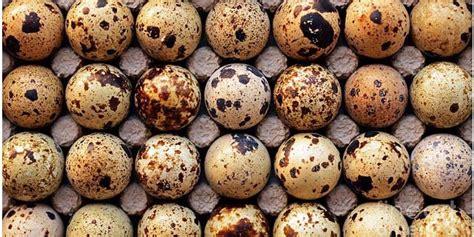 cara membuat telur asin untuk ujian praktek kuliner telur puyuh asin cara pengawetan yang patut