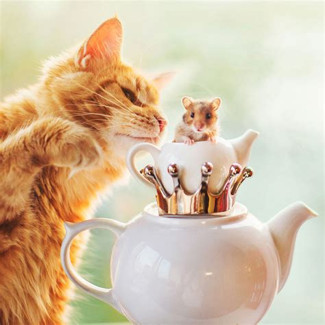 kristina makeeva cutlet the ginger cat is so majestic he even has his own