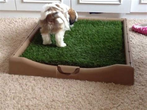 potty shih tzu litter box potty shih tzu litter box 1001doggy
