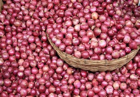 Bibit Bawang Merah Impor ekspor bawang merah belum mu penuhi target investasio