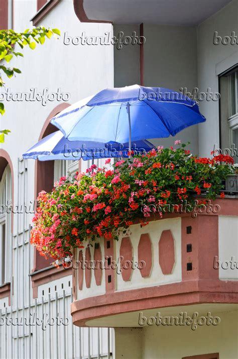 Pflanzzeit Geranien Balkon by Bild Balkon Mit Geranien 475014 Bilder Und