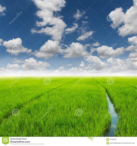 green food field a royalty free stock photo from photocase agriculture rice green field and blue sky stock photo