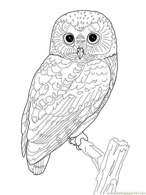 printable owl moon coloring pages of owls for adults bestofcoloring com