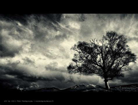 4 black tree file dramatic black and white tree in scottish highlands