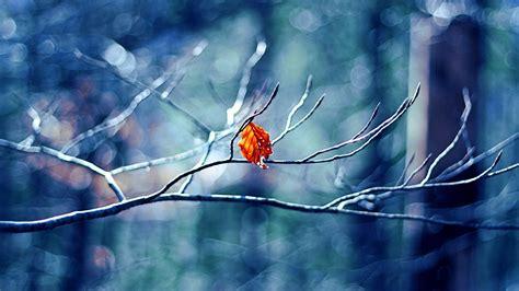 winter tree leaf wallpapers hd wallpapers id