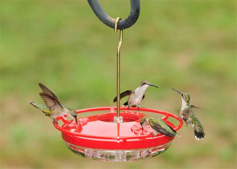 continue feeding hummingbirds others during winter months