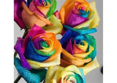 fiori olanda fiori olandesi arcobaleno4 fiori olandaa