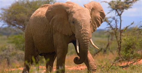 k chengro ger te hoe fotografeer ik een olifant ger poelgeest s