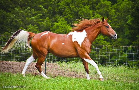 google images horses horses google search thee chion animal pinterest