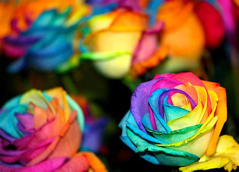 color splash images colorful flowers wallpaper and background photos 13490838