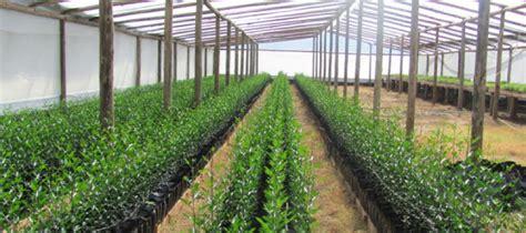 imagenes de semilleros temporales agricultura