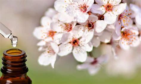 fiori di bach per dormire insonnia e sonno rimedi naturali per dormire bene e i 2