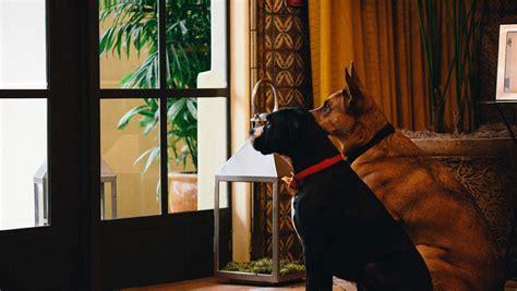 friendly hotels san diego pet friendly hotels san diego kimpton palomar hotel
