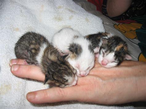 Magazines 24: Baby kittens, cute baby kittens, baby kitten