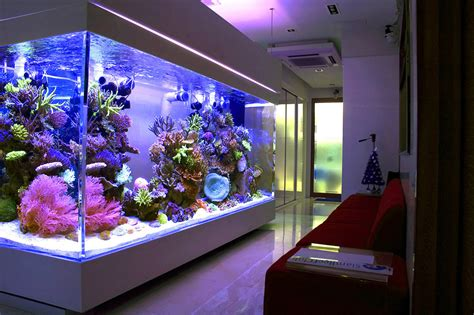 fish tank couch what s the largest home reef tank reef2reef