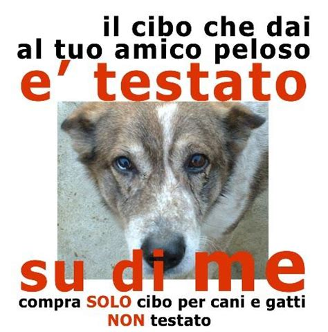 alimenti cani cruelty free cibo per animali cruelty free cosa significa paradiso