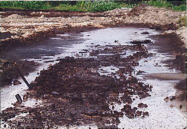 contoh bio remediasi bioremediasi tanah sumarsih07 s weblog