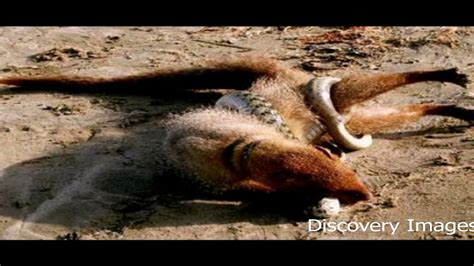 7 Most Poisonous Animals by Pin Most Dangerous Animals Deadliest Animal Danger On