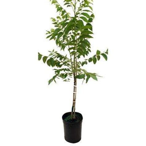 fruit trees plants edible garden garden center the