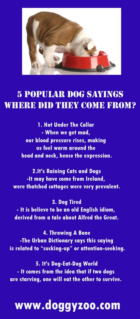 where did dogs come from 5 popular sayings where did they come from doggyzoo comdoggyzoo