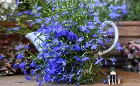 fiori da terrazzo fiori primaverili da balcone leitv