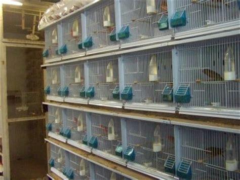 chillon gabbie mes nouvelles cages canariz un fameux gains de temps pour