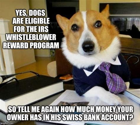 Lawyer Dog Meme - lawyer dog imgflip