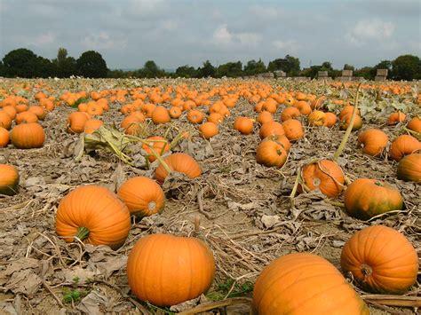 pumpkin pictures for thecontemplativecat october 2016