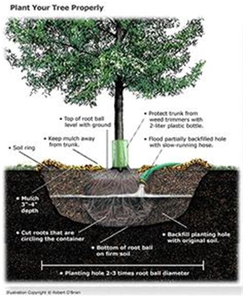 what to water your tree with of 3 in one and plants on