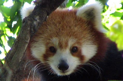 read panda manish home panda
