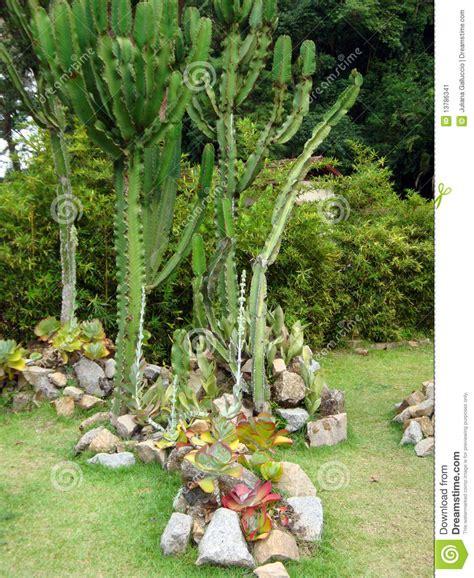 Cactus Botanical Garden Cactus In Botanical Garden Stock Image Image 13786341