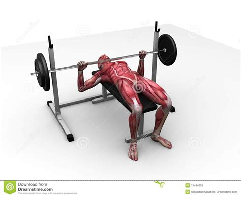does bench press work biceps male workout bench press royalty free stock photo